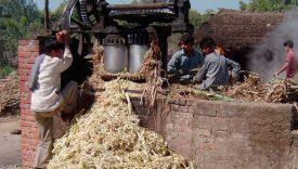 Nieuwe inzichten voor waterslurpende suikerindustrie