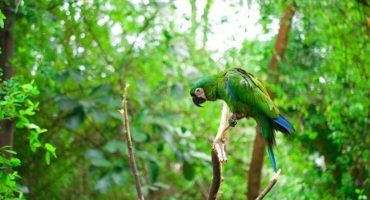 Papegaai in het Amazone-woud. Foto: Ryk Parras/Unsplash.